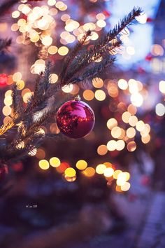 Christmas Time Is Here, Christmas Past, Cozy Christmas, Little Christmas, Christmas Movies, Christmas Lights, Christmas Wreaths, Christmas Ideas, Holiday Photos