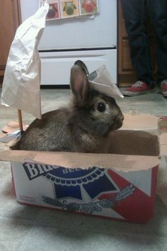 Whatever this beer, rabbit, sailboat combo is...I want it.