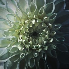 Dahlia  These are not photographs. These are oil paintings by Dennis Wojtkiewicz