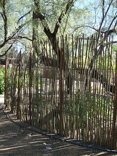 ocotillo fencing -I want to do this in front yard to south of house