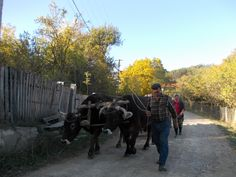 Autumn in Buzau county.   for tours visit http://Iexploreromania.com