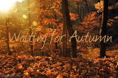 Waiting for autumn quotes outdoors sun trees autumn leaves orange