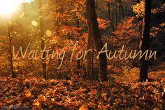 Waiting for autumn quotes outdoors sun trees autumn leaves orange