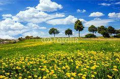 Auszeit im Frühjahr: Pusteblumenwiese Wildflowers, Spring Time, Vineyard, Golf Courses, Outdoor, Time Out, Outdoors, Wild Flowers, Vine Yard