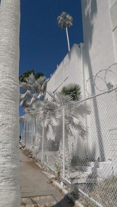 #painting #humor #whitepaint #blendin #justtrytoblendin #clever #camouflage #building #palmtrees #andwhosaidpalmtreesarentwhite #statement