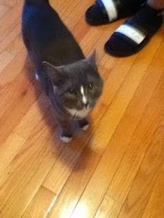 Introducing my new kitty Valentino!