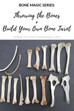 Bone throwing is one of the oldest forms of divination and can be found across multiple cultures throughout history. Because of this, there are multiple ways to practice throwing the bones and… Wicca Witchcraft, Wiccan Witch, Hag Stones, Witch Shop, Bone Crafts, Tarot Card Meanings, Animal Bones, Practical Magic, Book Of Shadows
