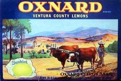 Oxnard Apples. #crateart