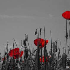 poppy flower by George Serbu Display Advertising, Print Advertising, Marketing And Advertising, Us Images, Red Poppies, Colour Images, Flower Photos, Poppy, Stock Photos