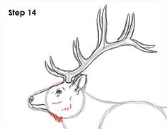 Learn how to draw an elk with this how-to video and step-by-step drawing instructions. A new animal drawing tutorial is uploaded every Tuesday. Deer Drawing Easy, Elk Drawing, Easy Drawings, Painting & Drawing, Elk Silhouette, Animal Drawings, Drawing Animals, Step By Step Drawing, Learn To Draw