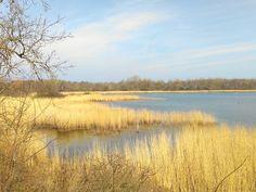 Boddenlandschaft auf der Ostsee Insel Rügen - ein wunderschönes Stück unberührte Natur in der Nähe unserer Ferienhäuser in Glowe auf Rügen. Hier ist Rügen noch ganz ursprünglich.