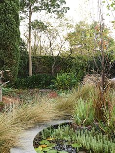 native grasses with exotic plants