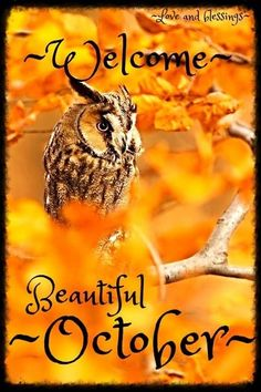 Welcome October Images, Hello October Images, October Pictures, Hello November, Happy October, Monthly Pictures, Fall Pictures, Funny Pictures, Happy New Month Quotes