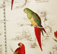 Parrot fabric tropical jungle toile document print from Brick House Fabric: Novelty Fabric