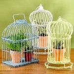 Birdcages with Plants!!