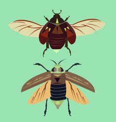 beetles - alysha dawn illustration Beetles, Dawn, Illustrator, Flat, My Favorite Things, Animals, Bass, Animales, Animaux
