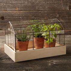 Copper & Glass Terrarium via Williams-Sonoma Indoor Planters, Outdoor Plants, Garden Planters, Garden Beds, Lawn And Garden, Home And Garden, Garden Gates, Indoor Garden, Potted Plants