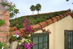 Green Roof Guides | Eco Friendly Roofing Options | HouseLogic