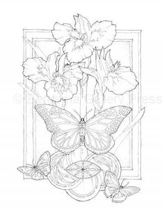 Jody Bergsma Coloring Pages