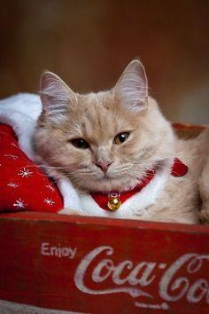 cute coke kitty