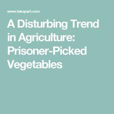 A Disturbing Trend in Agriculture: Prisoner-Picked Vegetables