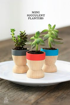 Fun and Quick DIY Projects to Make and Sell | Mini Succulent Planters by DIY Ready at http://diyready.com/18-more-easy-crafts-to-make-and-sell/