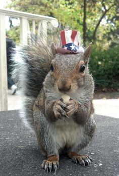 All-American squirrel-Penn State University squirrel Sneezy