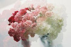 Gradients in a flower arrangement? Le love.