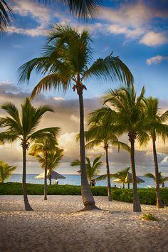 Club Med beach, Turks & Caicos ✯ ωнιмѕу ѕαη∂у