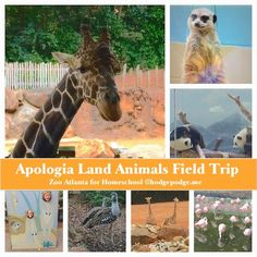 Apologia Land Animals of the Sixth Day Review
