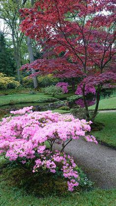 Japanse tuin in Den Haag Nederland