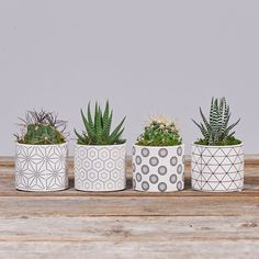 Beautiful Mini Plants In Pots You Must Have 39 Mini Plants, Potted Plants, Indoor Plants, Cactus Flower, Flower Pots, Flowers, House Plants Decor, Plant Decor, Plant Delivery