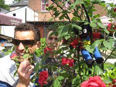 Kasteel Altembrouck, roses
