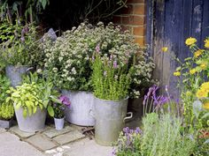 Vintage herb display A rustic set of metal pots of various sizes and shapes suits cottage garden designs.