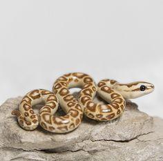 Snake Figurine by RamalamaCreatures.deviantart.com on @deviantART