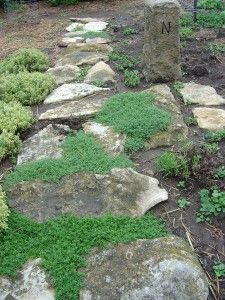 List of herbs to use as ground cover.