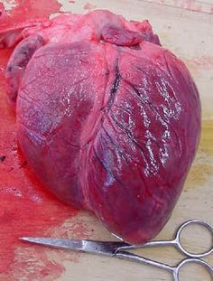 The Human Heart Real