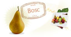 Bosc Pears- Link gives you info on Identifying, seasonality, ripening, culinary uses and history of. Pear Recipes, Fruit Recipes, Baby Food Recipes, Whole Food Recipes, Pear Nutrition, Kids Nutrition, Nutrition Tips, Pear Varieties