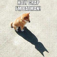 #Batedoge #bate #doge