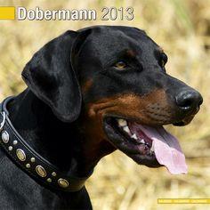 Dobermann Kalender 2013 (euro)