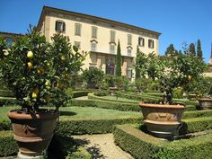 Citrus is planter pots throughout this garden in Chianti