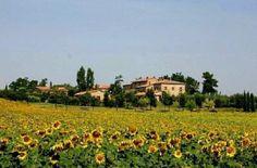 Tuscan Farm House - 3 bedroom condo Home Exchange, Italian Home, Closer To Nature, Farm House, Tuscany, Vineyard, Condo, Dolores Park, Community