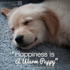 """""""Happiness is a warm puppy"""" Charles M. Schulz  So true, Piper and I spent a lot of cuddle time today after our trip to the park, and now she is sleeping on my feet keeping them oh so warm."""