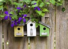 Photo about Three cute little birdhouses on rustic wooden fence with purple Clematis plant growing on them. Image of house, garden, purple - 14687777 Clematis Plants, Purple Clematis, Wooden Bird Houses, Wooden Fence, Rustic Fence, Spa Colors, Bird House Kits, Outdoor Spaces, Outdoor Decor