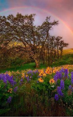 Nature - Community - Google+