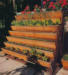 Vertical gardening -- kind of looks like porch or deck stairs repurposed, attractive