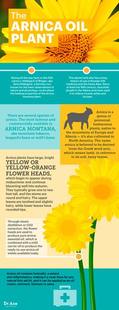 The Pain-Relieving, Inflammation-Reducing Power of Arnica Oil - Dr. Axe