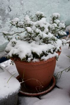 Winter Care On Balconies: Tips For Overwintering Balcony Gardens