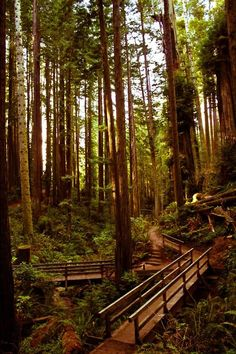 Redwood Bridge, Arcata, California photo via allie