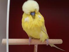 . Terre Nature, Pretty Birds, Amazing Nature, Parrot, Animals, Parrot Bird, Beautiful Birds, Animales, Animaux
